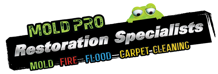 Mold Pro Water Removal Queens Ny Flood Damage Cleanup